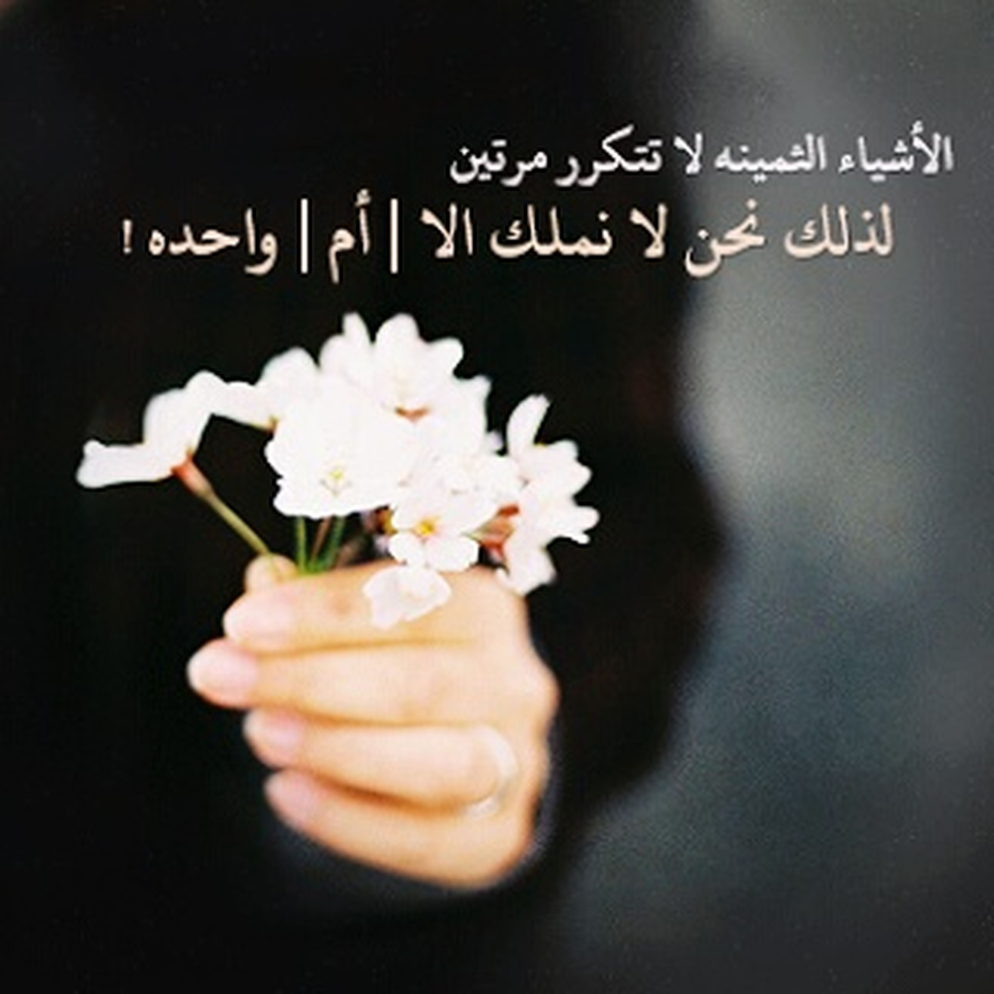 flower, freshness, person, close-up, white color, holding, indoors, one person, petal, focus on foreground, flower head, fragility, text, white, black background, studio shot, part of, western script, human finger
