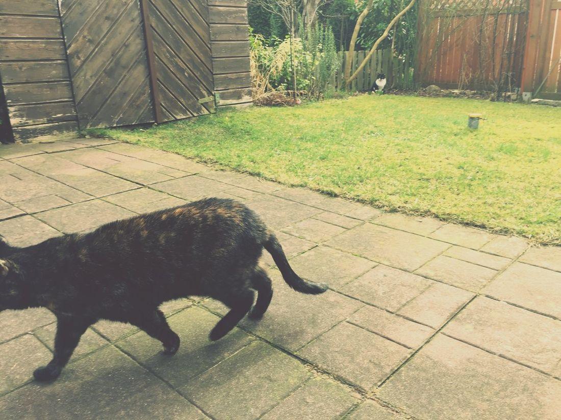 Cats Garden