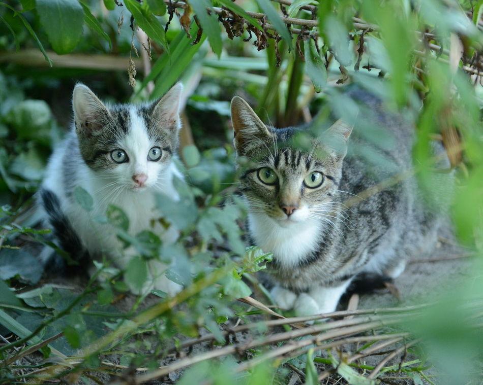 Beautiful stock photos of kitty, Animal Themes, Curiosity, Day, Domestic Animals