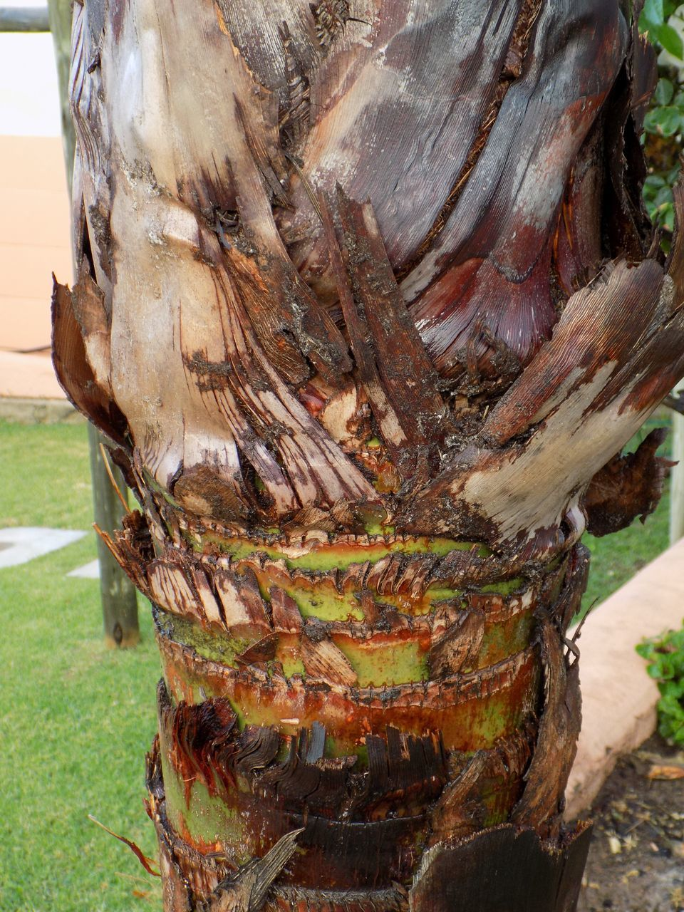 tree trunk, day, no people, outdoors, tree, close-up, tree stump, nature, grass