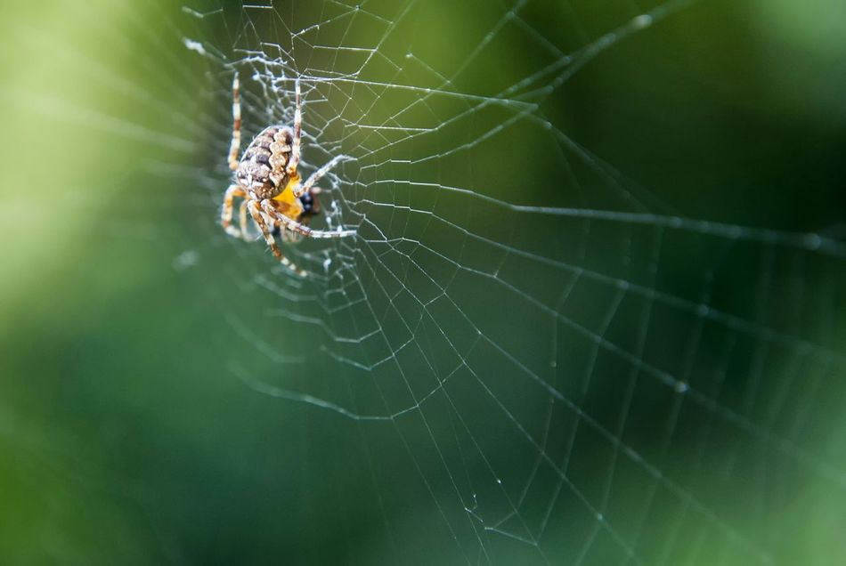 Beautiful stock photos of spider's, Animal Themes, Animal Wildlife, Animals In The Wild, Beauty In Nature