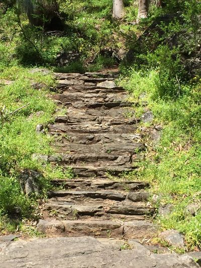 Stairway The Way Forward Forest Tranquility Nature Morialta Falls South Australia Outdoors Non-urban Scene Stone Material Pathway Going Up