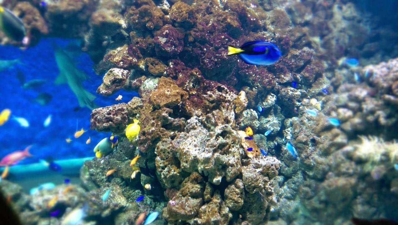 Finding Nemo At Blue Planet Copenhagen..
