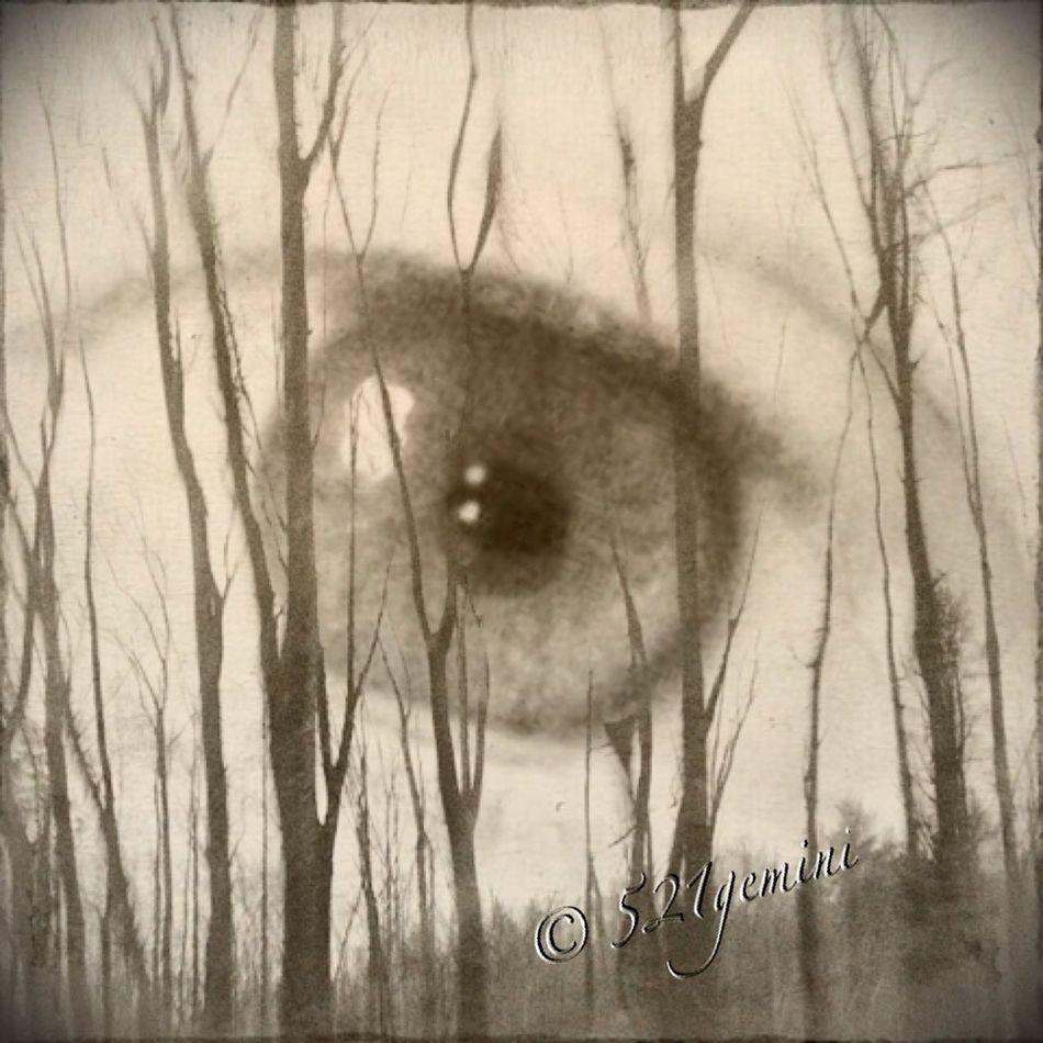 The Good Eye Series