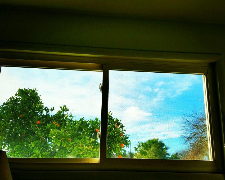 Northern California Sunday morning window view.. Tessad21 Learn & Shoot: Single Light Source Northern California Window Window View Windowview Bedroomwindowview Morning Good Morning Sunny Day Sunnymorning Sunny Morning
