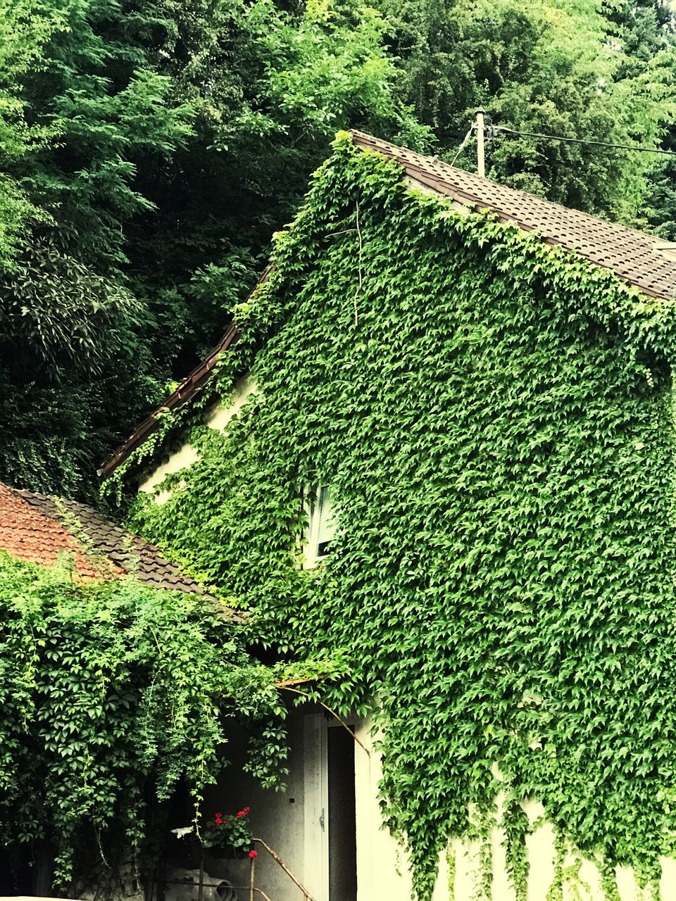 tree, green color, growth, nature, plant, architecture, day, outdoors, beauty in nature, no people, built structure, building exterior
