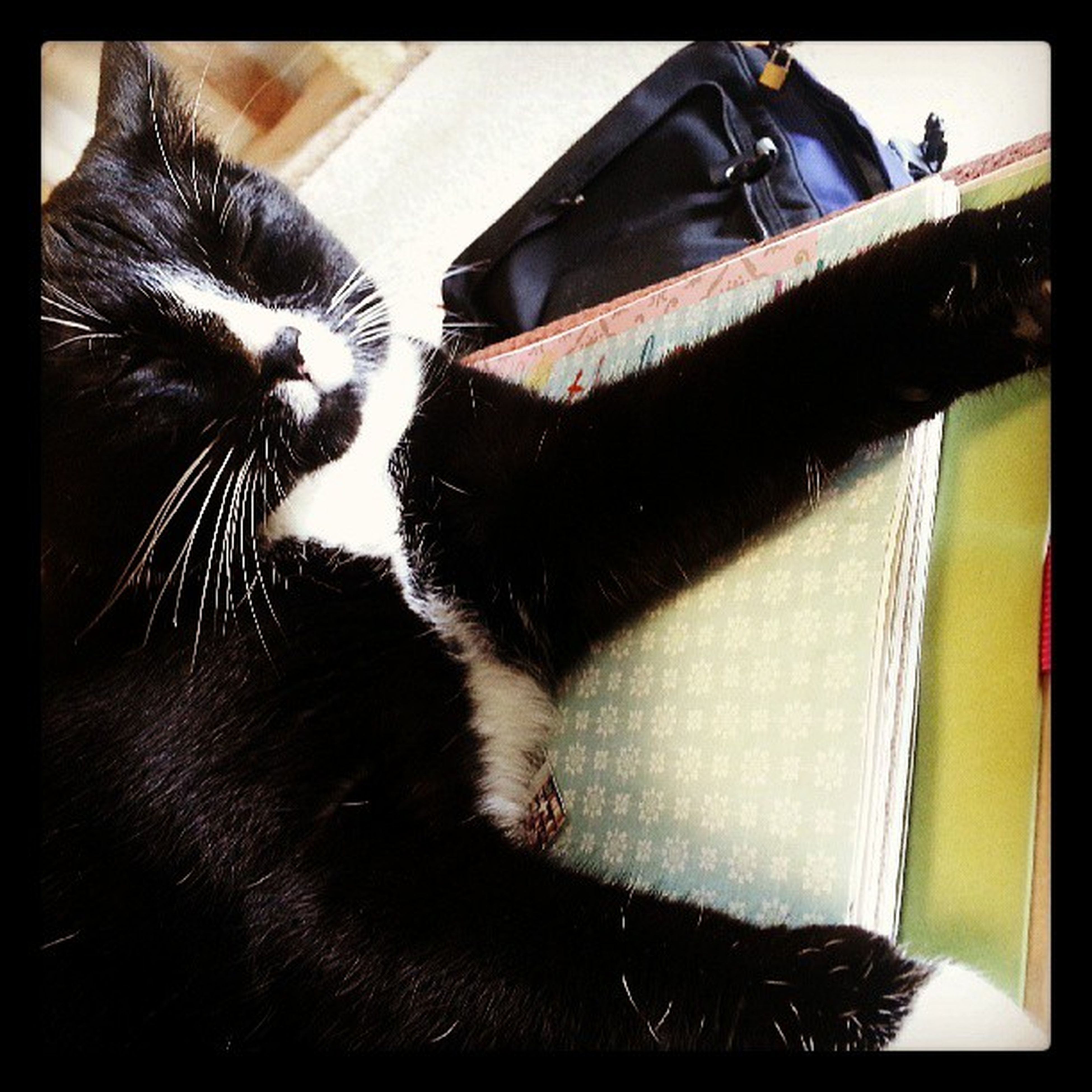 """""""Well mom, you weren't petting me, so I decided to lay down and take a nap on your scrapbook. I regret nothing."""" Ilovemycat Catstagram Catsofinstagram Sillycatteh"""
