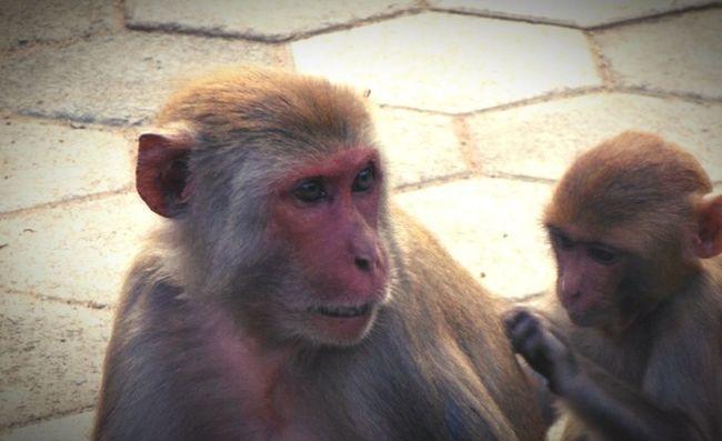 Nature Love Panchmarhi Monkeythieves Beautiful Nature Thepinkface