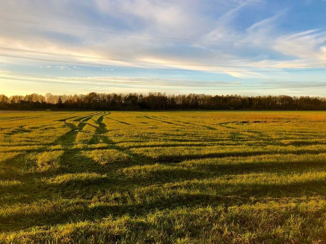 Lines Sky Nature Beauty In Nature Cloud - Sky Landscape Agriculture Scenics Rural Scene Sunset Golden Hour Grass Field