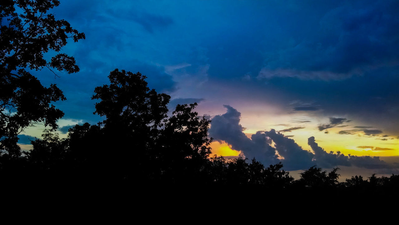 tree, silhouette, sky, nature, beauty in nature, tranquility, tranquil scene, sunset, scenics, no people, outdoors, growth, landscape, night