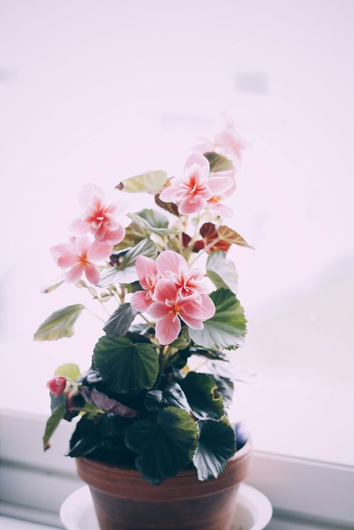 ♡ Flower Window Light Photography Eye4photography  Light And Shadow Indoor Nature Calmness Daylight Taking Photos Beautiful