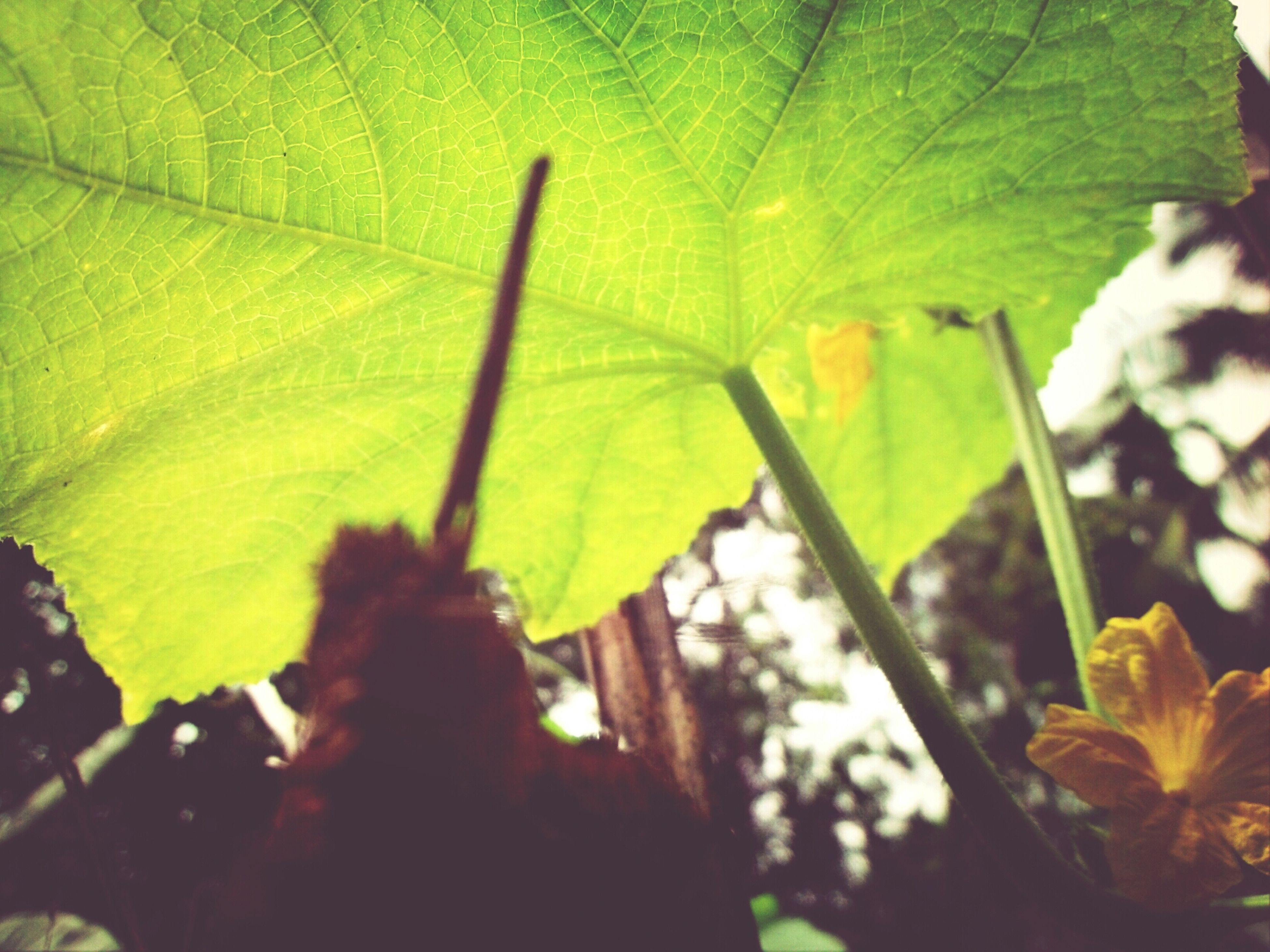 leaf, growth, yellow, leaf vein, nature, close-up, fragility, plant, green color, flower, beauty in nature, focus on foreground, sunlight, outdoors, freshness, day, leaves, selective focus