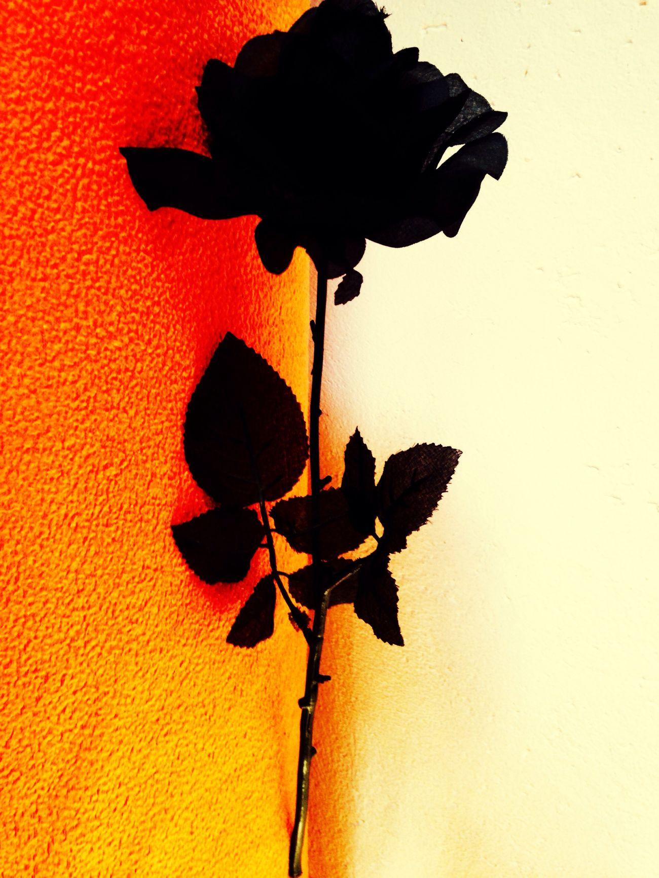 Flower Rose - Flower No People Black And Orange (: Colors Roses Roses🌹