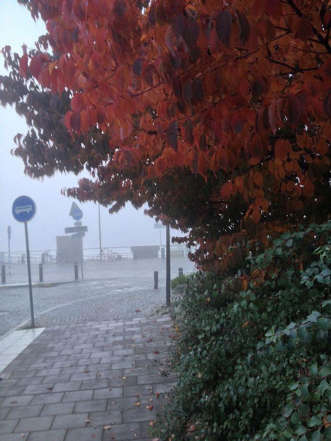 Autumn Is Here...Fall Mood! Autumn Colors Fog Södermalm Stockholm