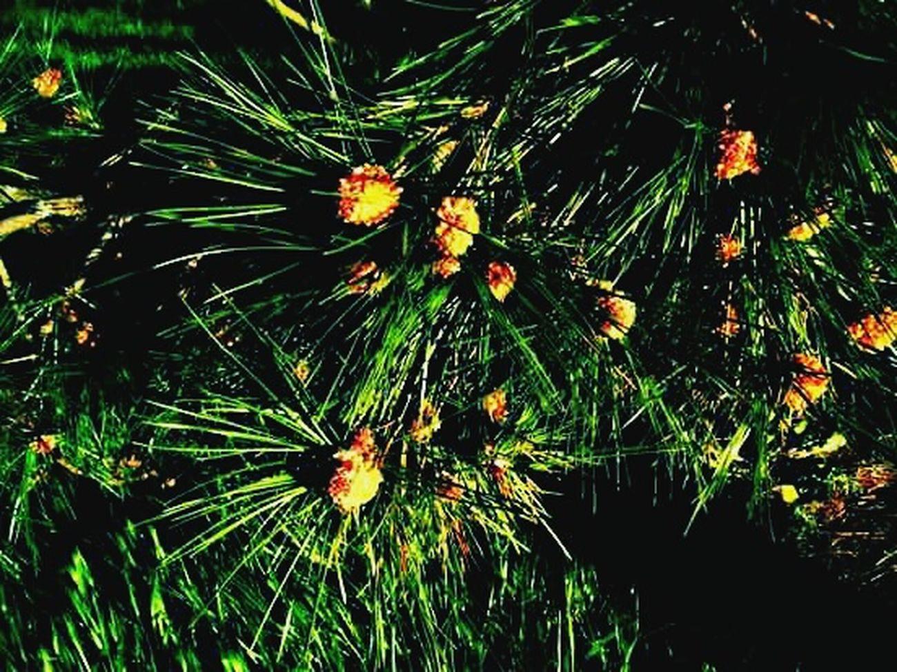 Drzewko Beautiful Nature Artistic Photo Summer Tree Passion