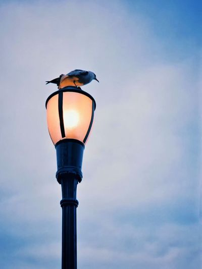 Lighting Equipment Street Light Bird Animals In The Wild No People Sky Outdoors Perching Low Angle View Illuminated Animal Wildlife Animal Themes Day Close-up Nature Beauty In Nature Manhattan New York Battery Park EyeEmNewHere The Week On EyeEm