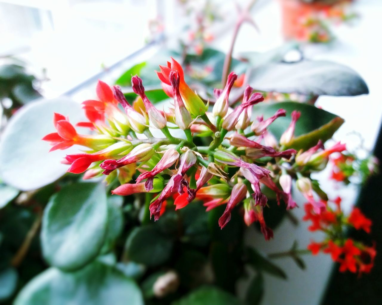 Flower Plant Leaf Nature Herbal Medicine Flower Head Indoors  Growth Beauty In Nature Nature
