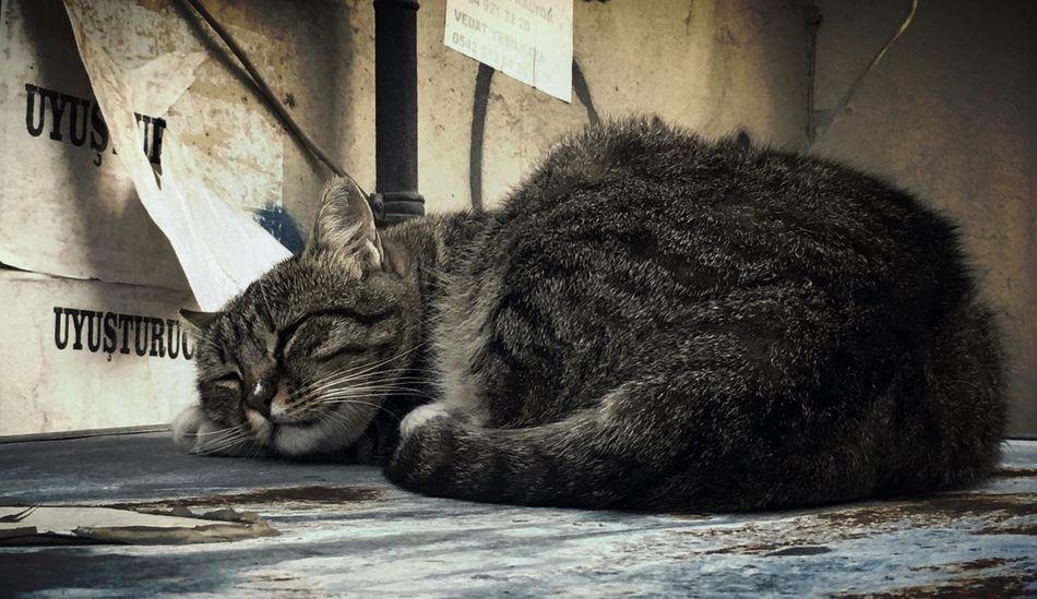 Uyuş Cat Cats Streetphotography Street Life Lazy Uyuşturucu DrugFree