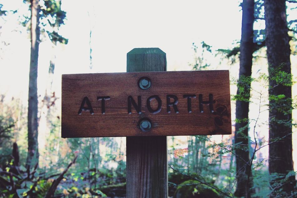 At North. Autumn Fall Mountainvibes Adventure Beauty In Nature Sky Outdoors No People Close-up Nature Tree Vermont The Way Forward Nature Travel Hike Trail Hiking Thunderingfalls