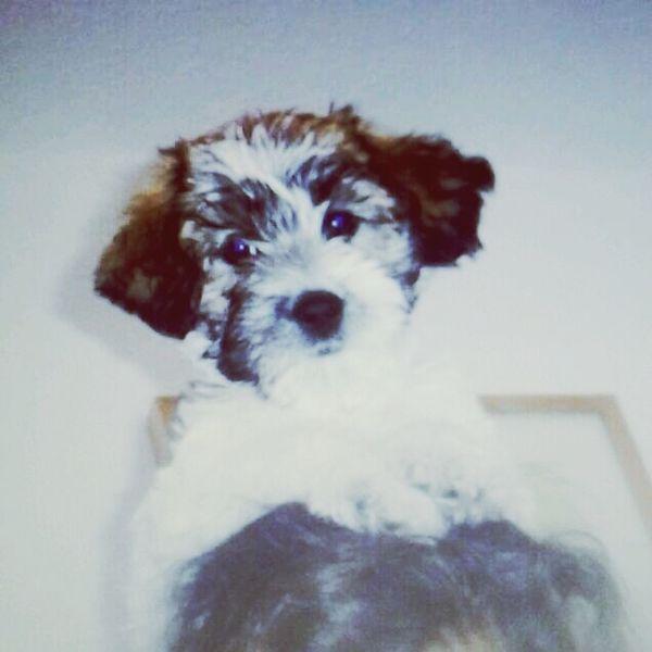 My Dog Cute Beauteful