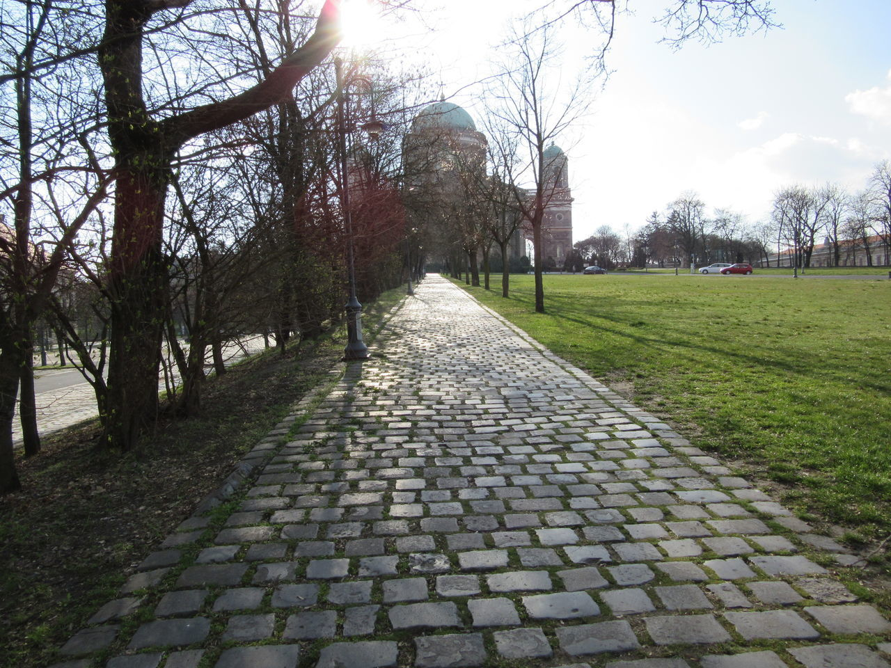 Budding Tree Cobblestone Empty Places Extinct Footpath Grass Outdoors Park Road Sidewalks Sunlight