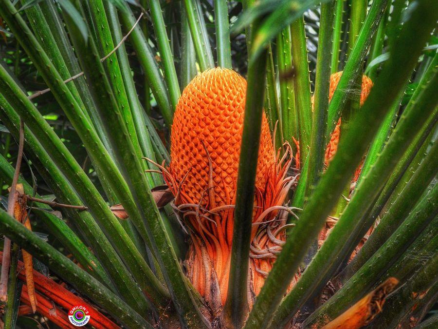 Nature Green Color Orange Color Close-up Beauty In Nature Plant Growth Fruit Natural Bangladesh EyeEm Bangladesh Bangladesh 🇧🇩 Field Backgrounds Outdoors