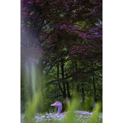 Munique. Featuremeofh @1x5 1x5 Boagaleria Parededevidro Visualsoflife Nikon Fotoxigenio Englishgarden