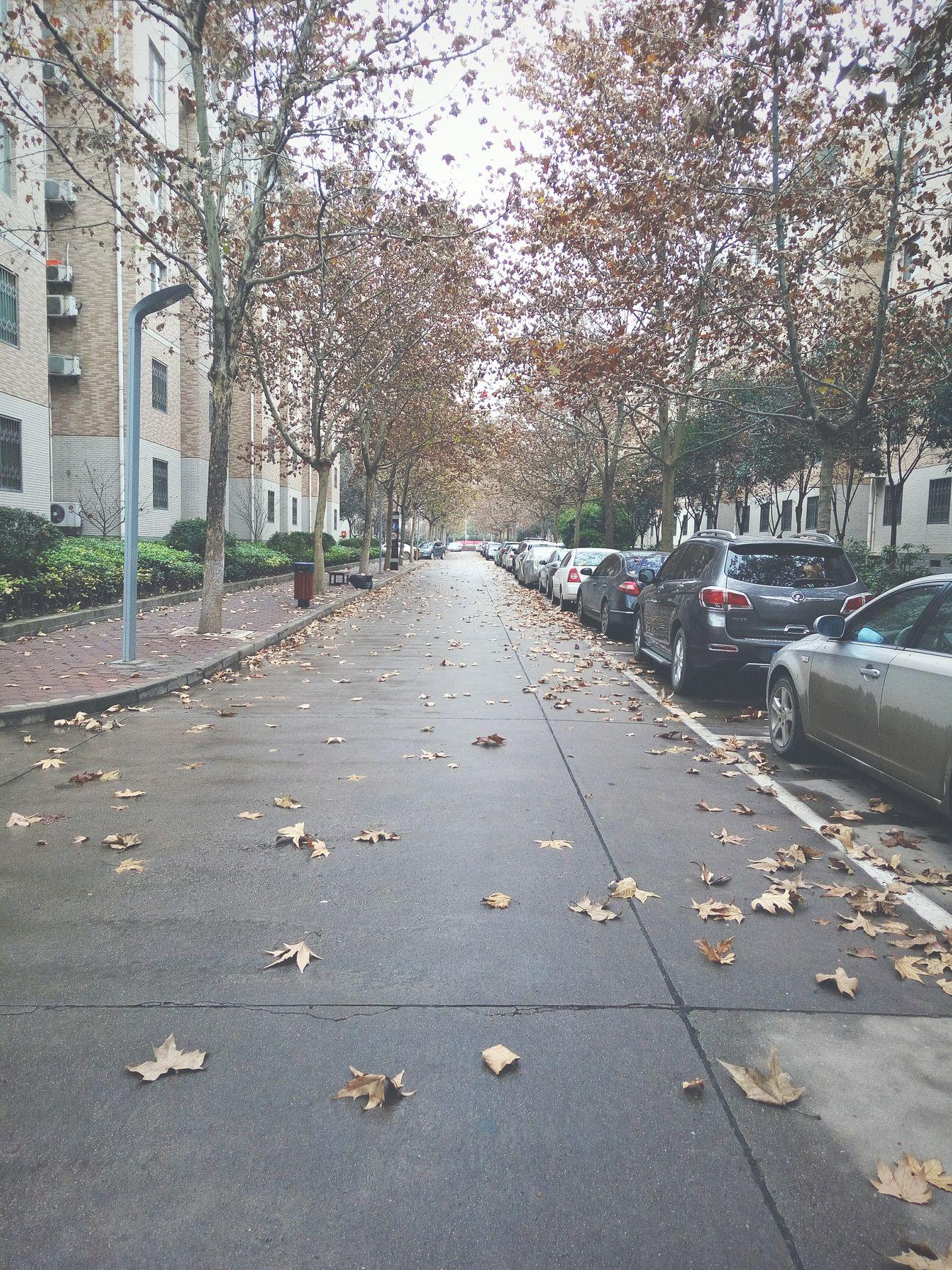 last autumn...