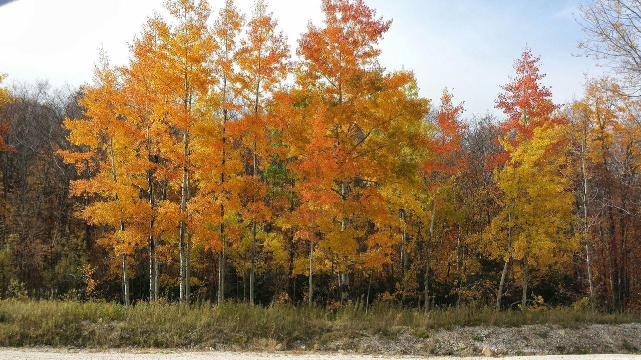 Autumn🍁🍁🍁 Autumn Colors Autumn Trees Maple Trees Fall Colors Yellow Yellow-orange Orange Natures Beauty Killington High In The Green Mountain State Open Edit