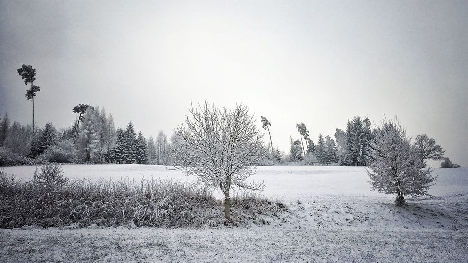 Winter Cold Temperature Tree Snow Nature Tranquility Beauty In Nature Field Outdoors Forest No People Taking Photos Interesting Perspectives Outdoor Photography Photography Winter Nature Photography Deep Snow Wintertime Winterland
