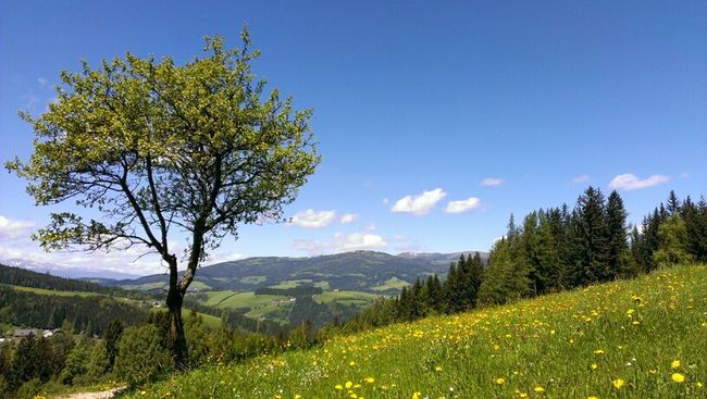 Hanging Out Nature Landscape Austria
