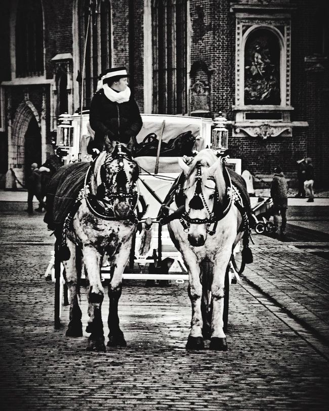 Horse And Carriage Traveling Poland Blackandwhite Photography