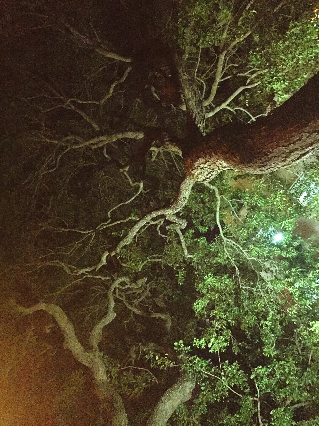 Trees that resemble yourself Tree Growth Nature