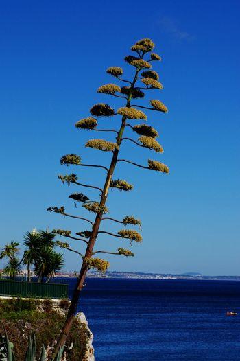 Portugalr Views]]Eye4p[a:HolidaypTrees:Life Is A BeachrEnjoying Life