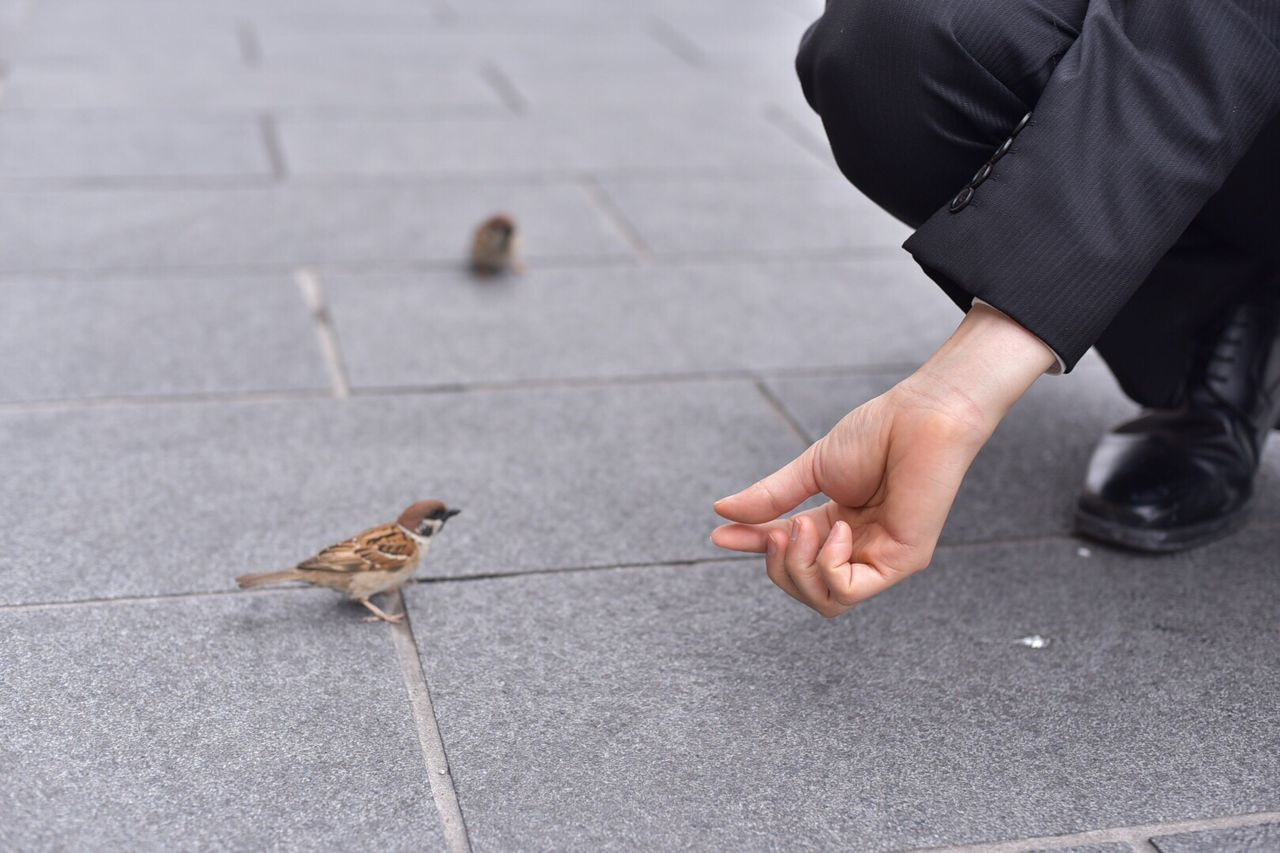 Close-Up Of Man Feeding Bird