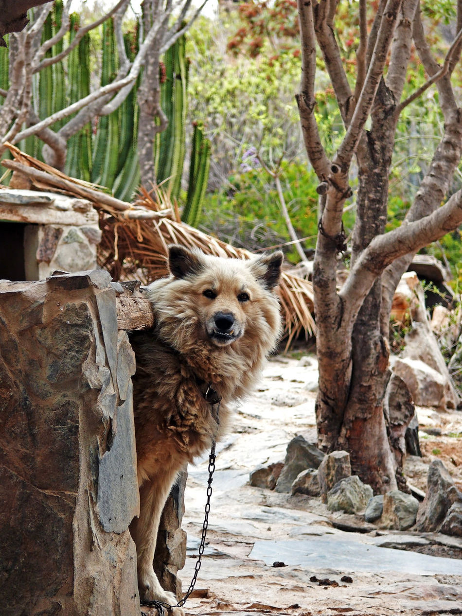 one look   Animals Beauty In Nature Brown Canary Islands Day Dog Exploring Canary Islands Fataga Forest Gran Canaria Landscape Las Palmas Mammal Mundo Aborigen Nature No People Non-urban Scene Outdoors Portrait SPAIN Tranquility Tree Tree Trunk Pets We Love Everyday Moments