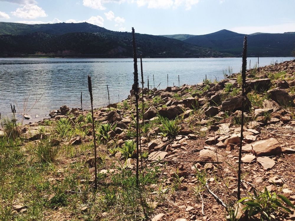 Lake Rockport Utah Camping Plants