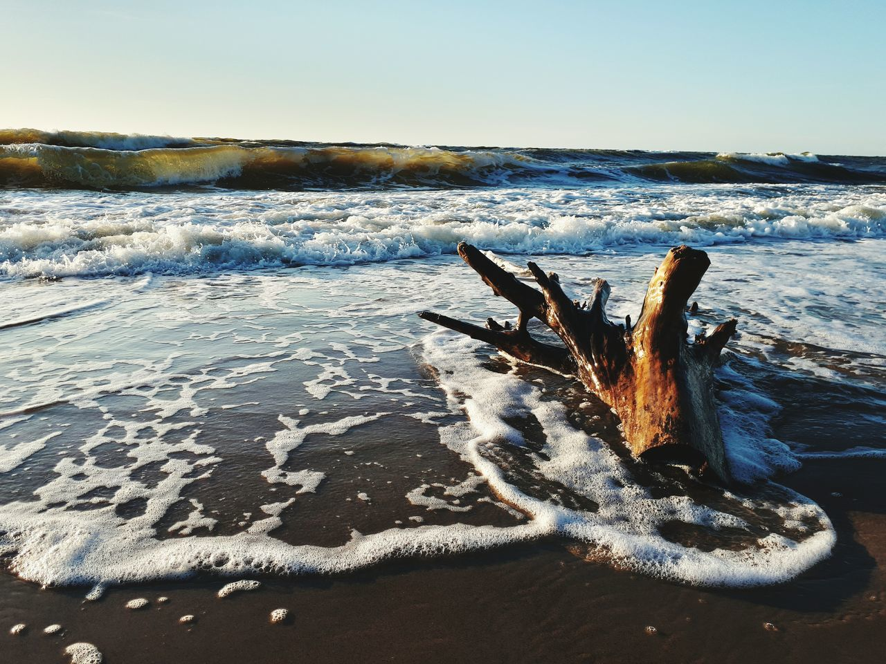 Sea beach & tree stump Beach Sea Sand Nature Outdoors Water Horizon Over Water Landscape Wave Sea Life Beauty In Nature Tree Stump In Water