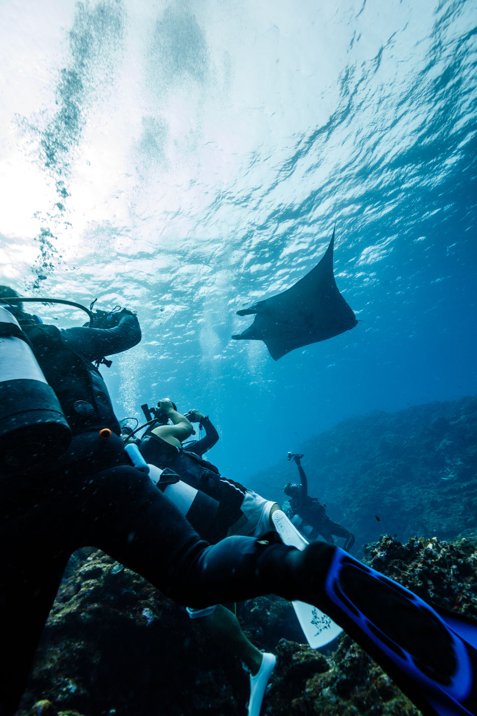 underwater adventure Adventure Behind Day Divers Exploration Flower Human Hand Leisure Activity Lifestyles Men Nature One Person Outdoors People Real People Scuba Diver Scuba Diving Sea Sea Life Swimming Take Picture UnderSea Underwater Watching Water