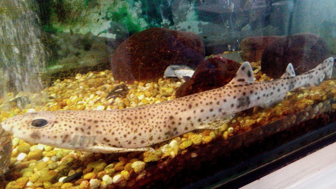 Aquatic Life Aquarium Life Marisqueira Aquarium Marisqueria Marisco Mariscos Seafoods Seafood Restaurant