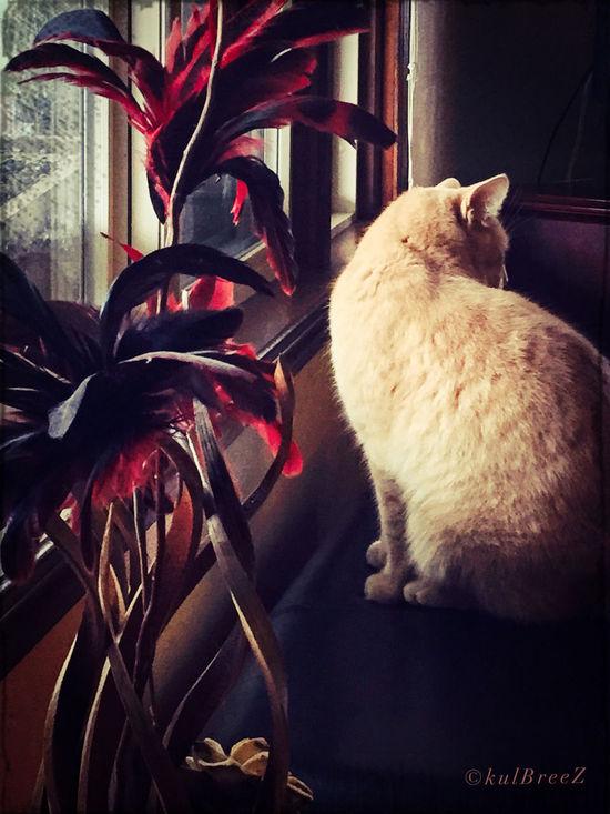 Taking Photos Streamzoofamily SandySeries Cat
