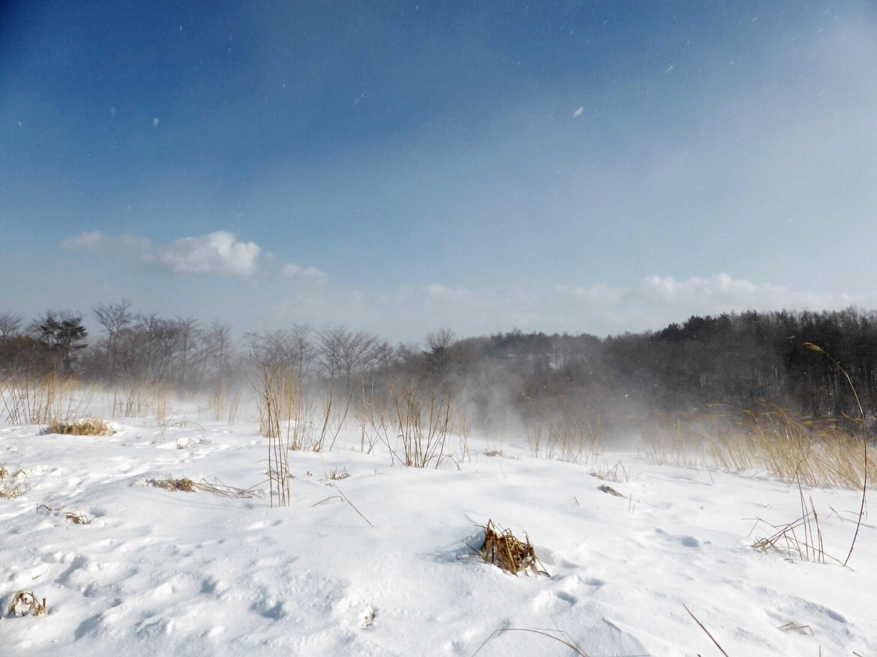 Nature EyeEm Nature Lover Nature_collection Winter Snow Wind Snowstorm Japan