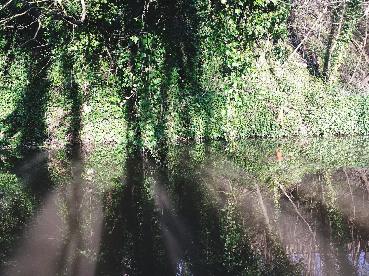 Nature Growth Tree Green Color No People Low Angle View Backgrounds Full Frame Beauty In Nature Outdoors Day Tranquility Close-up Leaves Yorkshire Green Landscape Landscapes Freshness Springtime Canal Reflections Reflection Beauty In Nature Tranquility