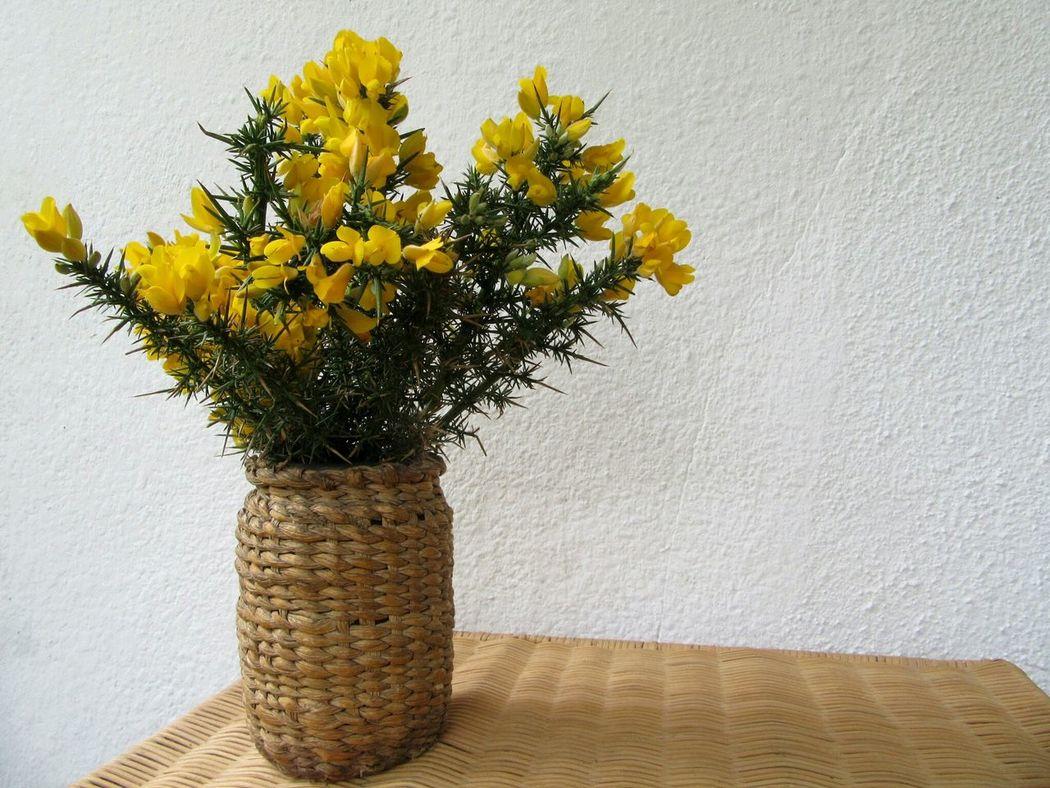 Gorse flowers in rush woven covered jampot Vase Of Flowers Rushes Weaving JamJar Hand Craft Irish Roscommon Ireland