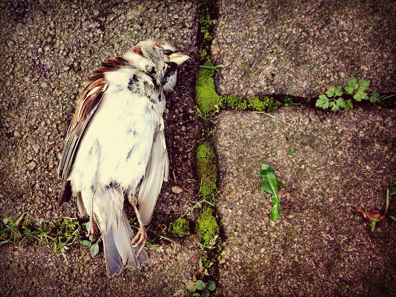 Beautiful stock photos of death, Animal, Animal Themes, Avian, Bad Lippspringe