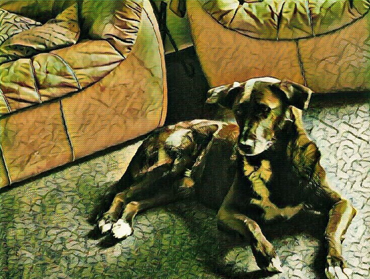 Drastic Edit Artistic Expression Watchful Dog Relaxing In The Living Room Dogslife Dogs Pet Portrait Of A Dog Art Photography Fun With Editing :) Pets Of EyeemHome Is Where The Art Is Frankfurt Germany🇩🇪