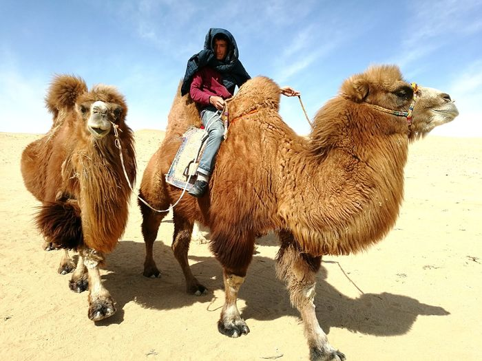 Live For The Story Camel Desert Sand Dune Nature People Mongolia Nomads Nomadiclife Beauty In Nature Camel Riding Sand Animal Outdoors First Eyeem Photo