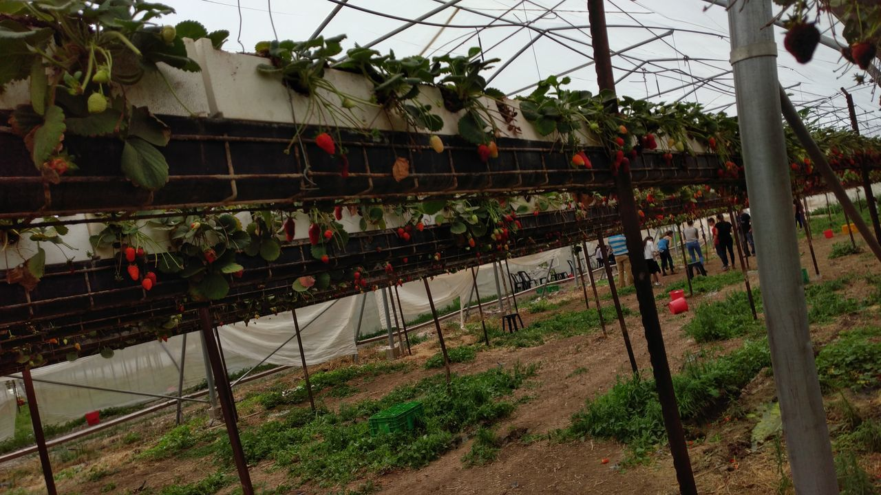 growth, plant, day, outdoors, hanging, built structure, nature, no people, architecture, plant nursery, sky