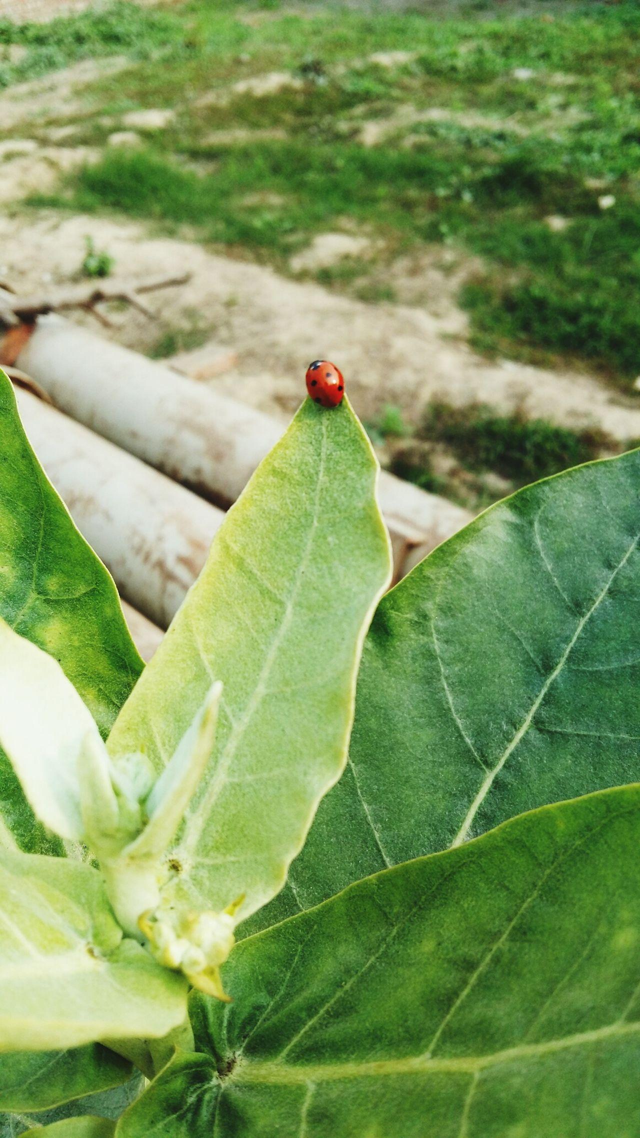 Beetel Nature Photography Plants 🌱 Backyard Backyardphotography
