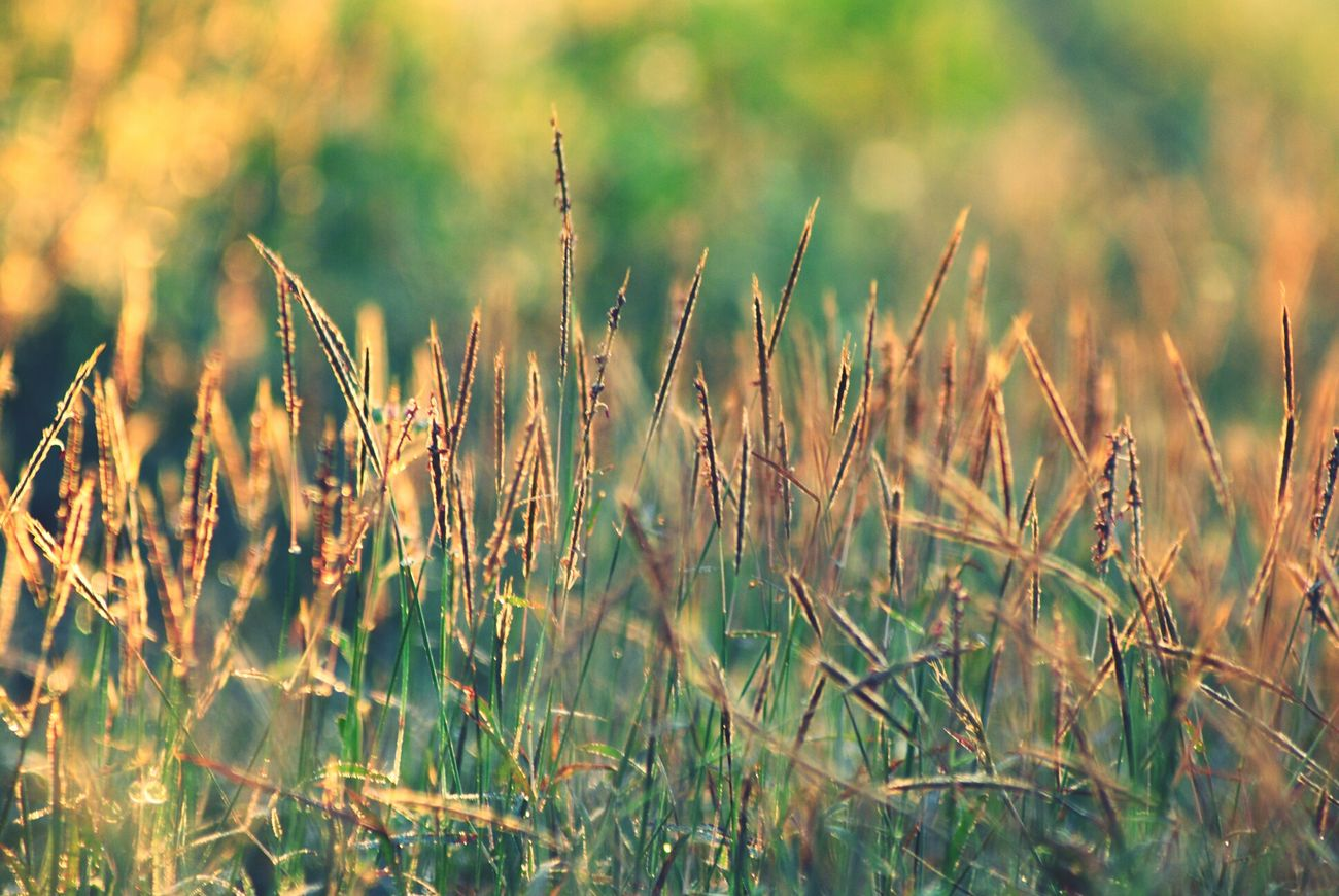 good morning sunshine !!!! Sunrise INDONESIA Photography Eye4photography
